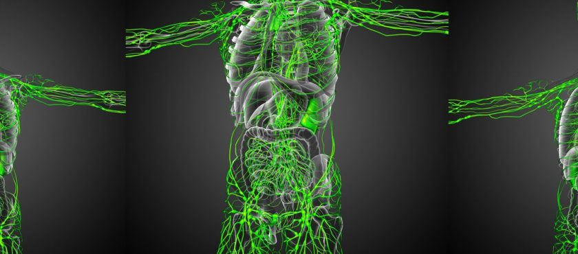 Your Lymphatic System Kept Healthy